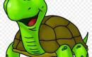 Tortoise Material Shortage